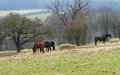 Free Horses Grazing In Rural England Royalty Free Stock Image - 30251316