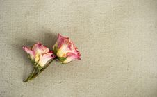 Free Dried Roses On A Painted Canvas Royalty Free Stock Photography - 30250737