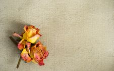Free Dried Roses On A Painted Canvas Royalty Free Stock Images - 30250829