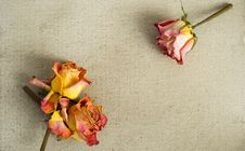 Free Dried Roses On A Painted Canvas Stock Image - 30250841