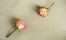 Free Dried Roses On A Painted Canvas Royalty Free Stock Photos - 30250858