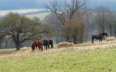 Horses Grazing In Rural England