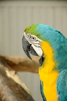 Free Macaw Parrot. Stock Photography - 30259812