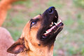 Free Closeup Of Dog&x27;s Head, Shot From Below With Shallow DOF Royalty Free Stock Photo - 30268445