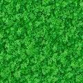 Free Seamless Texture. Green Meadow Grass. Royalty Free Stock Photos - 30272608