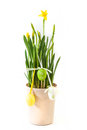 Free Decorative Easter Eggs And Daffodils Stock Photography - 30279492