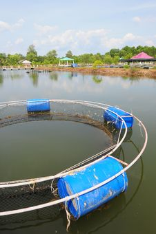 Free Fish Farm Net Stock Images - 30270054
