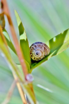 Free Snail On Leaf Royalty Free Stock Photos - 30270608