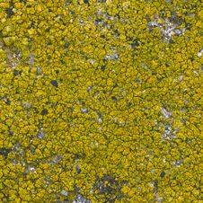 Free Moss Seamless Background Royalty Free Stock Image - 30271426
