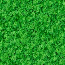 Free Seamless Texture. Green Meadow Grass. Royalty Free Stock Photos - 30272608