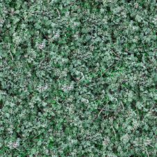 Free Seamless Texture Of Sage-Brush. Royalty Free Stock Images - 30272719