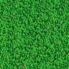 Free Seamless Texture. Green Meadow Grass. Royalty Free Stock Photography - 30273997