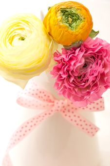 Free Pink And Yellow Ranunculus Stock Images - 30279574