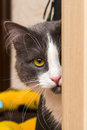 Free Cat With Yellow Eye Royalty Free Stock Photography - 30281247