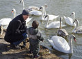 Free Father And Son Feeding Swans Royalty Free Stock Image - 30281766