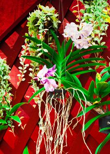 Free Tropical Orchid Flowers Royalty Free Stock Image - 30280576