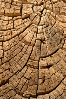 Free Old Wood Tree Design Juniper Background Texture Royalty Free Stock Image - 30281016
