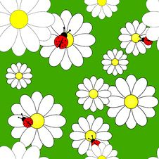 Vector Seamless Pattern With Camomiles Royalty Free Stock Photos