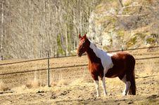 Free Brown White Horse Royalty Free Stock Photos - 30288448