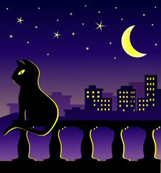 Free Cat In Midnight On The Balcony Royalty Free Stock Photography - 30296127