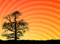 Free Tree At Sunset Royalty Free Stock Photo - 3031895