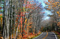 Free Drive Through Autumn Tree Royalty Free Stock Image - 3034756