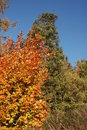 Free Autumn Leafs And Trees Stock Image - 3037501