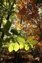 Free Autumn Leafs Stock Image - 3037591