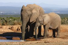 Free Elephant Mom And Calf Royalty Free Stock Images - 3030159