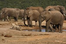 Free Elephants At A Waterhole Royalty Free Stock Photos - 3030178