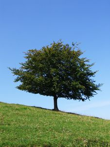 The Tree On The Slant Royalty Free Stock Photo