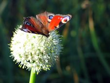 Free Butterfly On The Flower Royalty Free Stock Images - 3032629