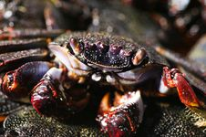 Free Cooked Crab Stock Images - 3032654