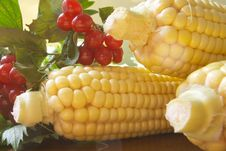 Free Fresh Corn Stock Photos - 3032763