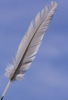 Free Feather Stock Photos - 3033503