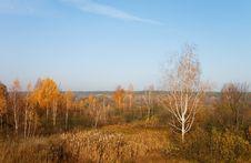 Yellow Autumn Trees Stock Photos