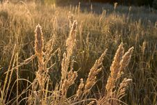 Free Fall Meadow Stock Images - 3035244