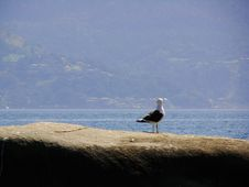 Free Seagull Stock Photography - 3035852