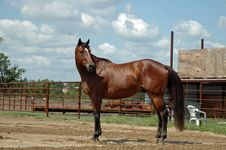 Free Horse Royalty Free Stock Photos - 3036208