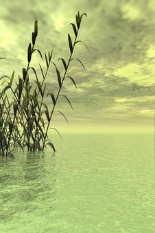 Free Water Grass Stock Photography - 3037122
