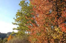 Free Autumn Leafs And Trees Royalty Free Stock Photo - 3037445