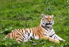 Free Tiger Stock Image - 3037941
