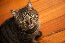 Free Cute Tabby Cat Stock Photography - 3038392
