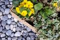 Free Botany - Floral Arrangement Stock Photos - 30305423