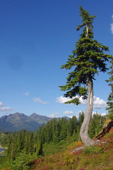 Free Mount Baker National Forest Stock Photos - 30303353
