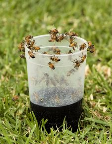 Free African Honey Bee On Plastic Glass Royalty Free Stock Images - 30304719