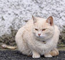 Free Cat Stock Photo - 30305900