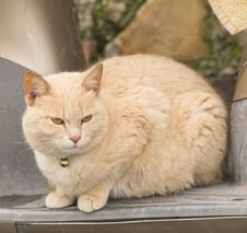 Free Cat Royalty Free Stock Photos - 30305908
