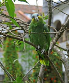 Free Parrot In The Wild Royalty Free Stock Image - 30306656