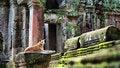 Free Angkor Wat Temple Royalty Free Stock Image - 30312946